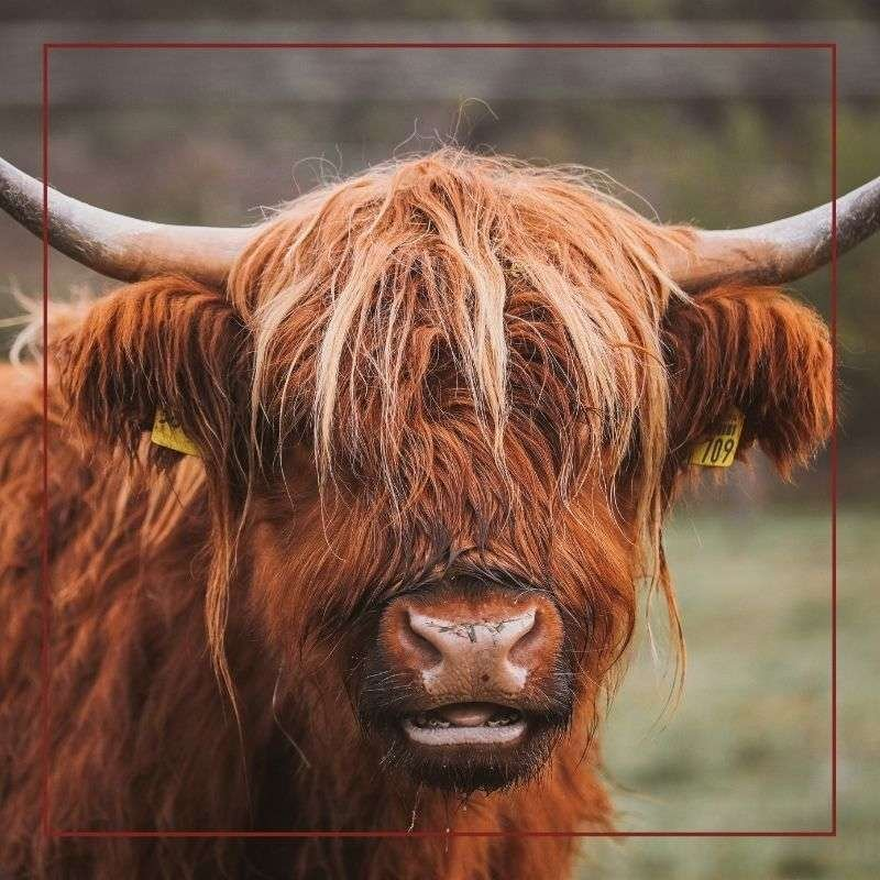 Red doesn't make Bulls angry - Tiry Originals the color Red