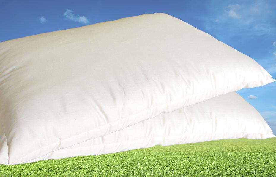 100% Organic Cotton Pillow