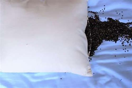 100% Organic Buckwheat Pillow