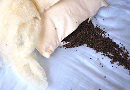 Organic Buckwheat and Eco-Wool Combination Pillow