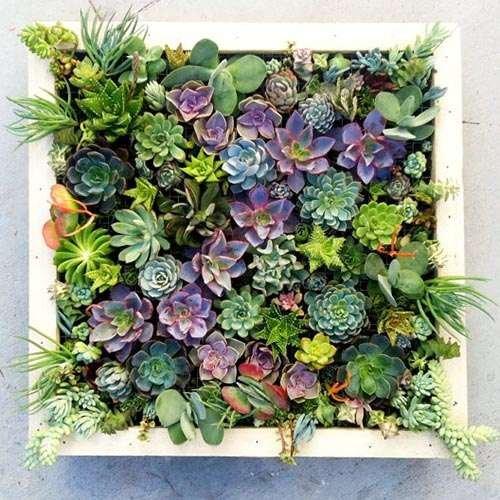 succulent living walls