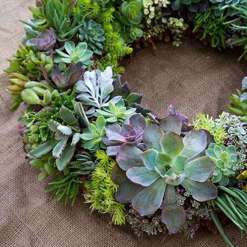 succulent wreaths