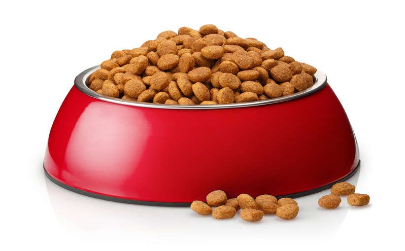Dog dry food in a red bowl