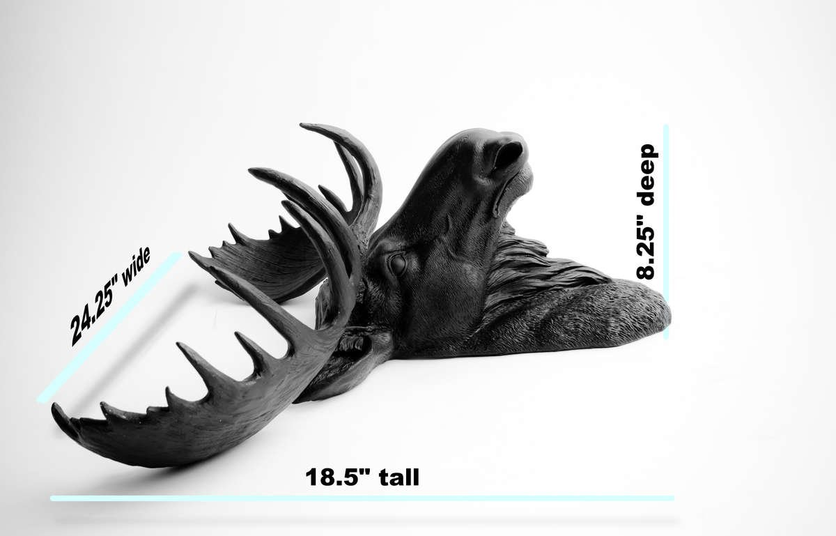 "Moose Head Wall Mount Dimensions. 24"" wide, 18.5"" tall, and 8.25"" deep."