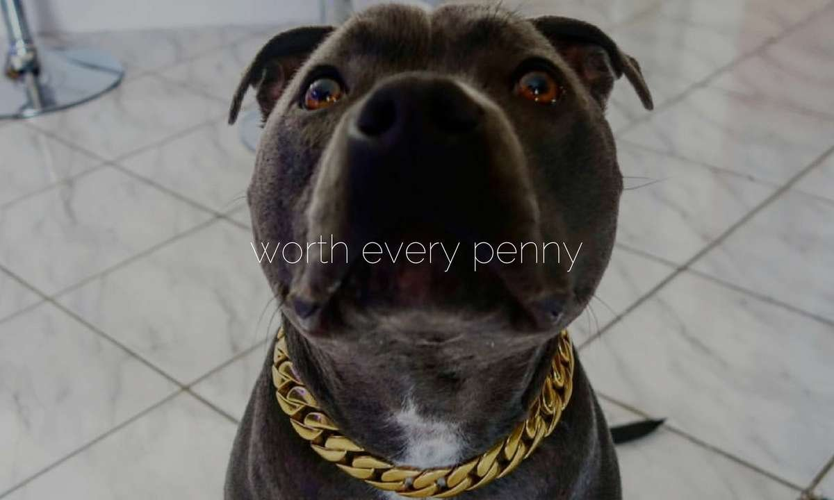 KILO Large Gold Dog Collar Cuban Link Stylish Gold Dog Chain Collar for Large Strong Dogs Thick Bully Pit Bull Collar Doberman Stainless Steel Collar - BIG DOG CHAINS - 3