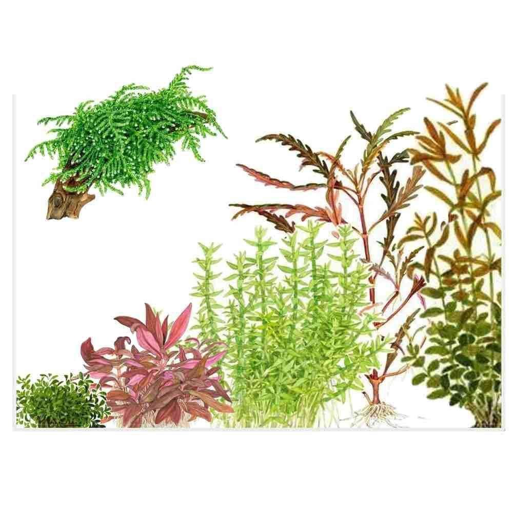 Aquatic Plants for Freshwater Planted Aquariums | Aqua Lab
