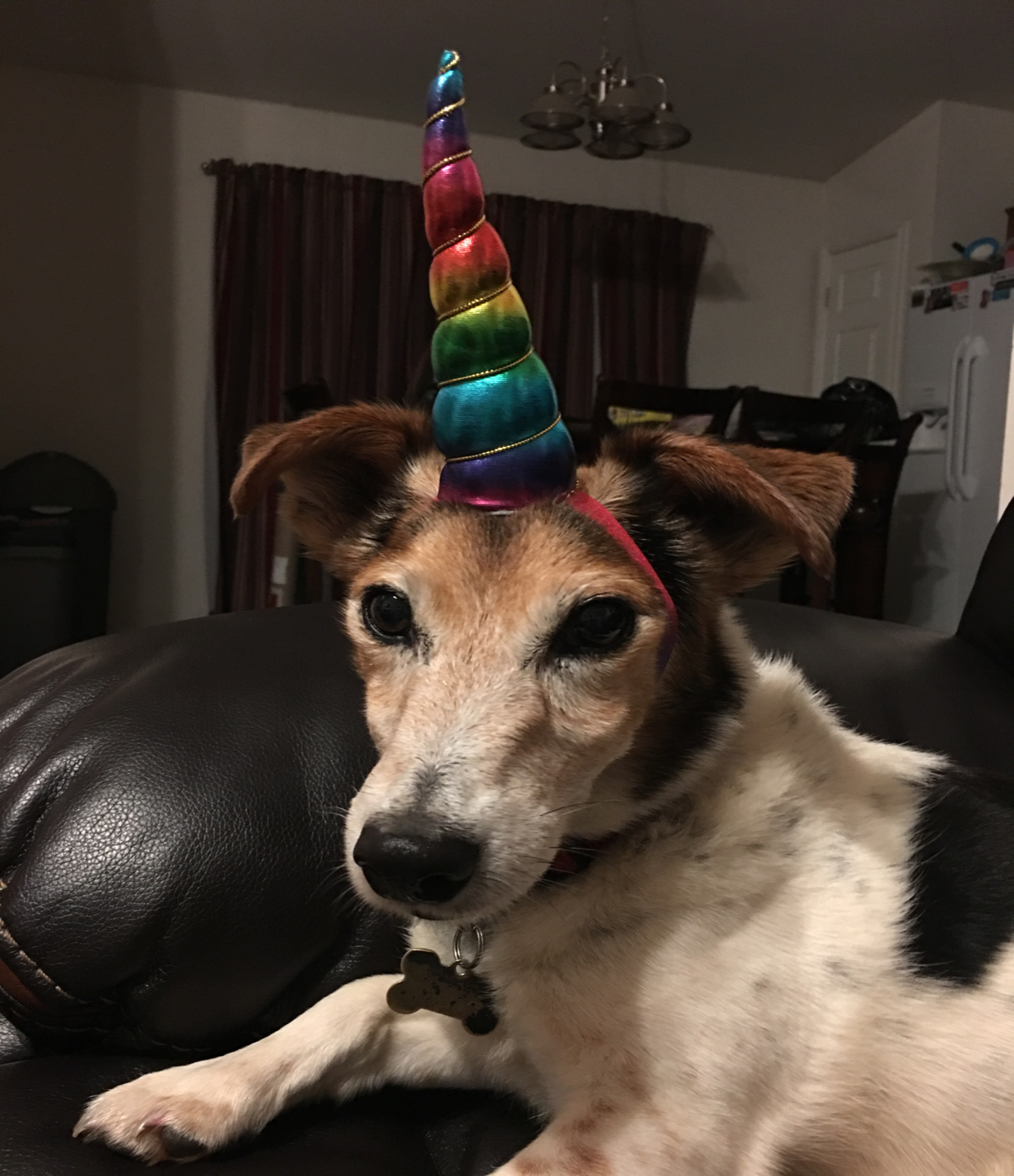 Unicorn Dog Horn