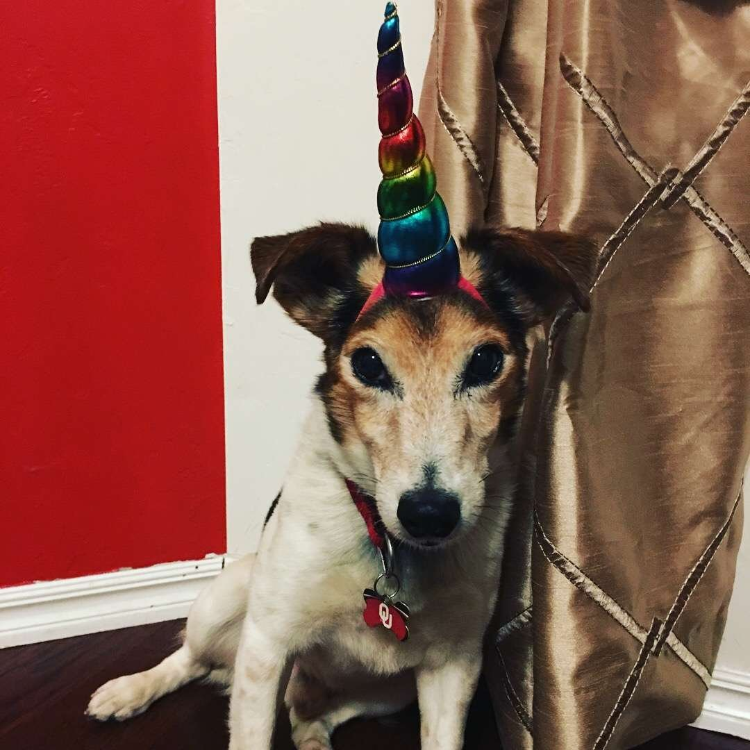 Unicorn Horn Dog