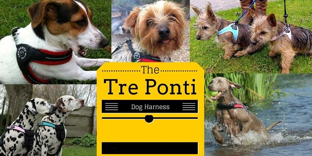 All Tre Ponti Harnesses