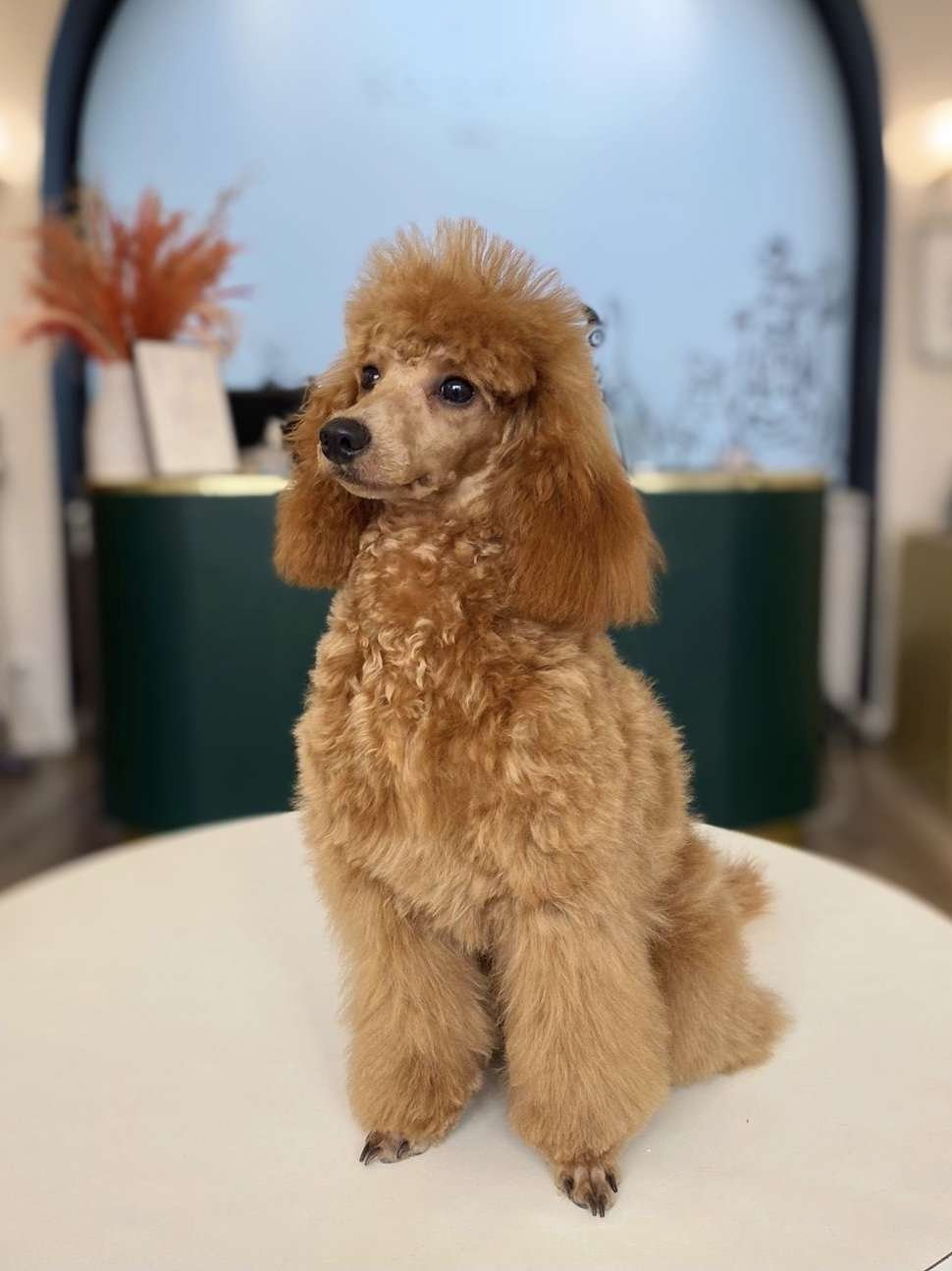 dog grooming salon in Paris, toilettage paris 6eme, dog grooming, dog care