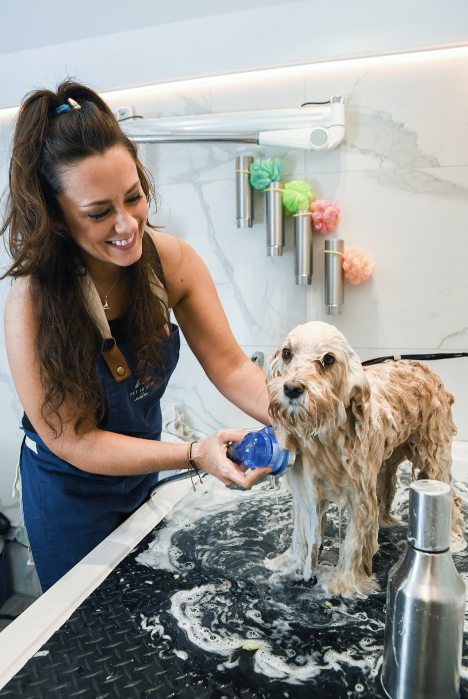 dog grooming Paris, toilettage chien