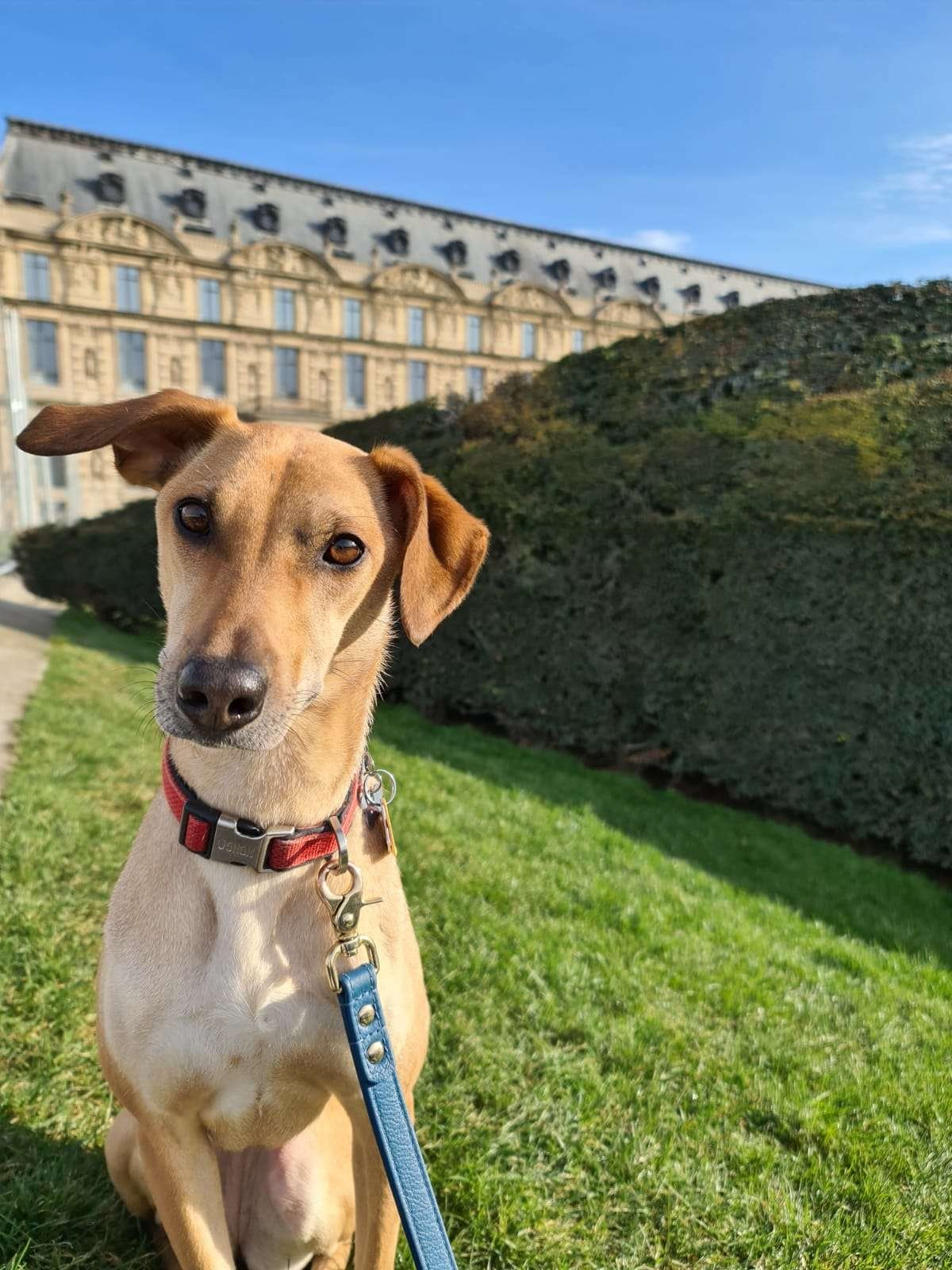 dog walking in Paris