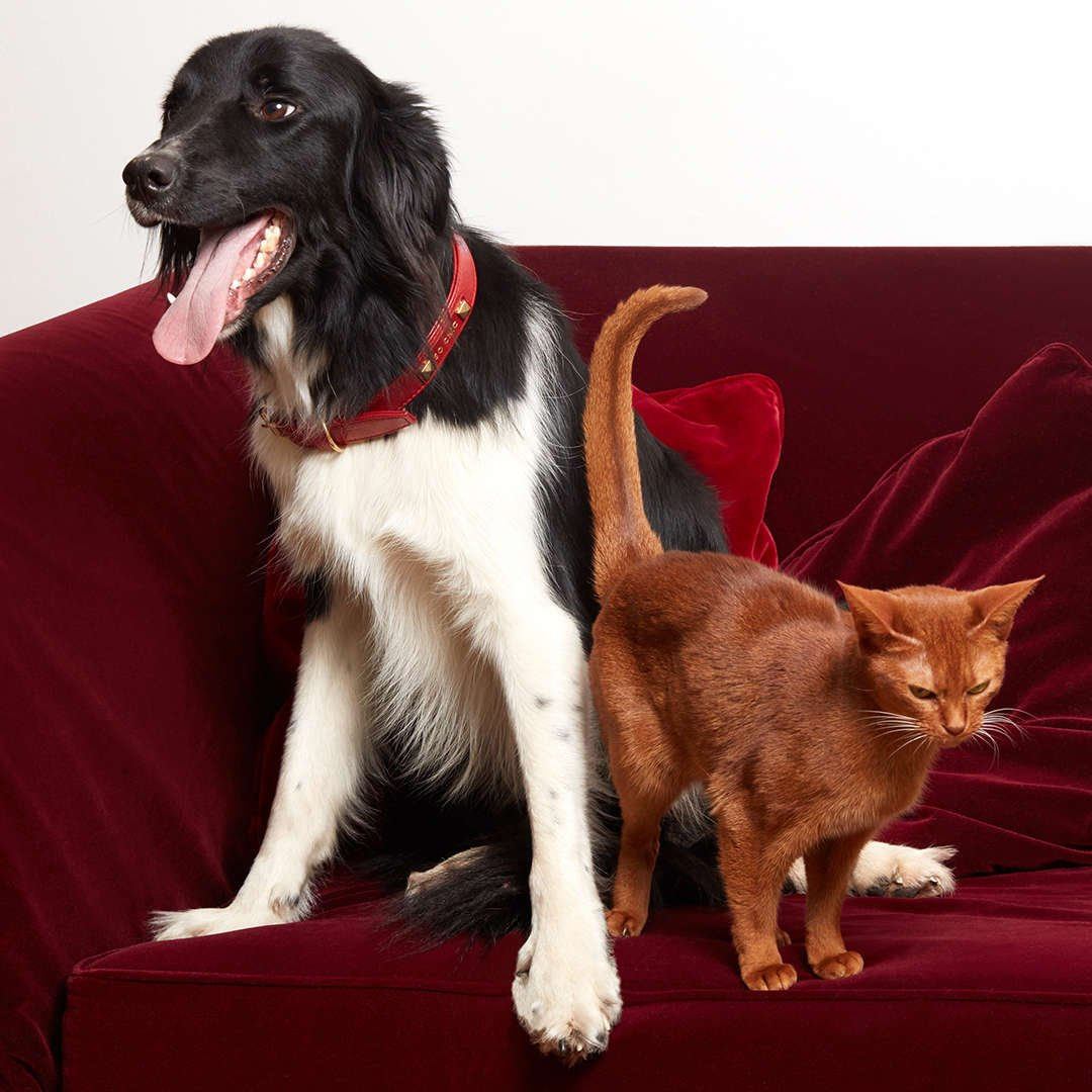 luxury quality pet accessories Made In France