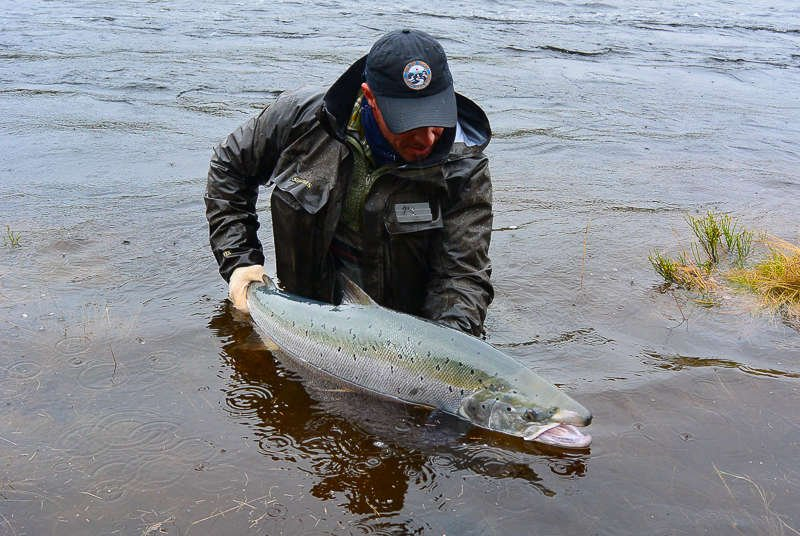 antti pirinen kharlovka salmon