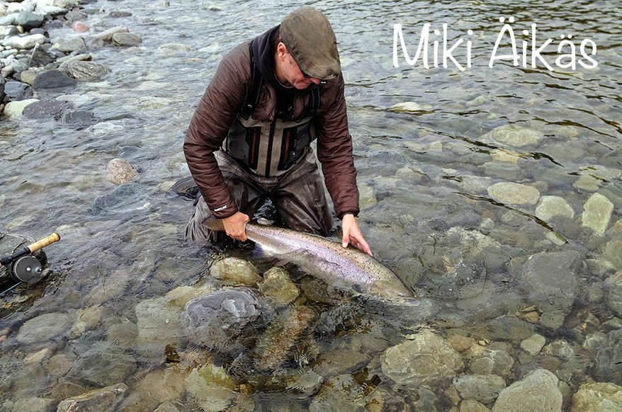 miki äikäs late season salmon silver dream