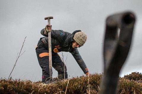 Tree Planting Ireland