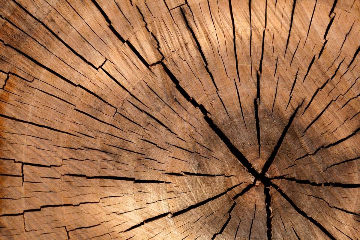 Tree cirlces