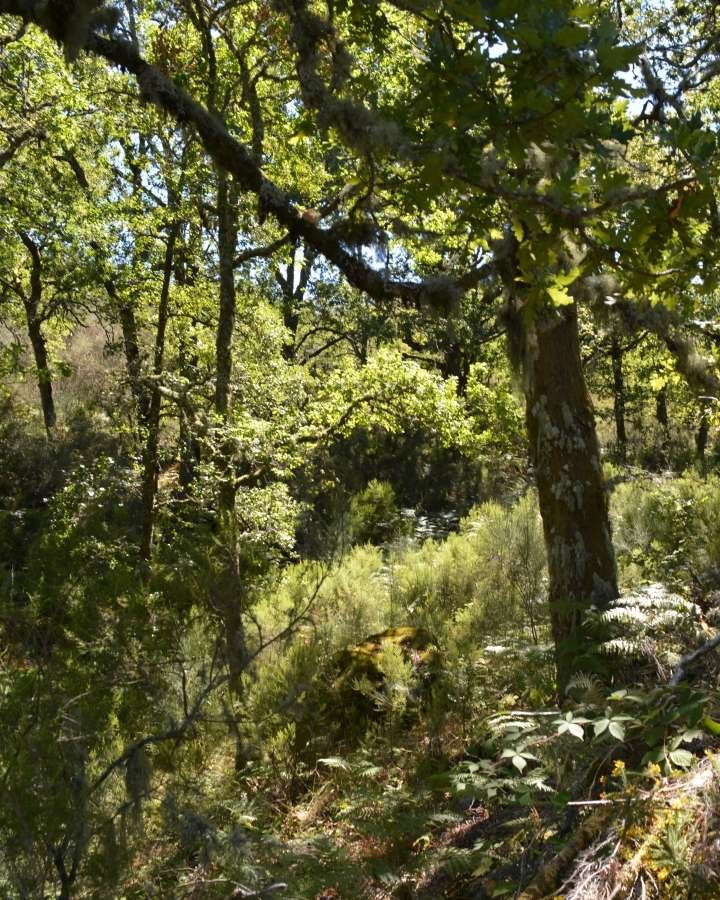 Native Woodland Plants: Mossy Earth Membership