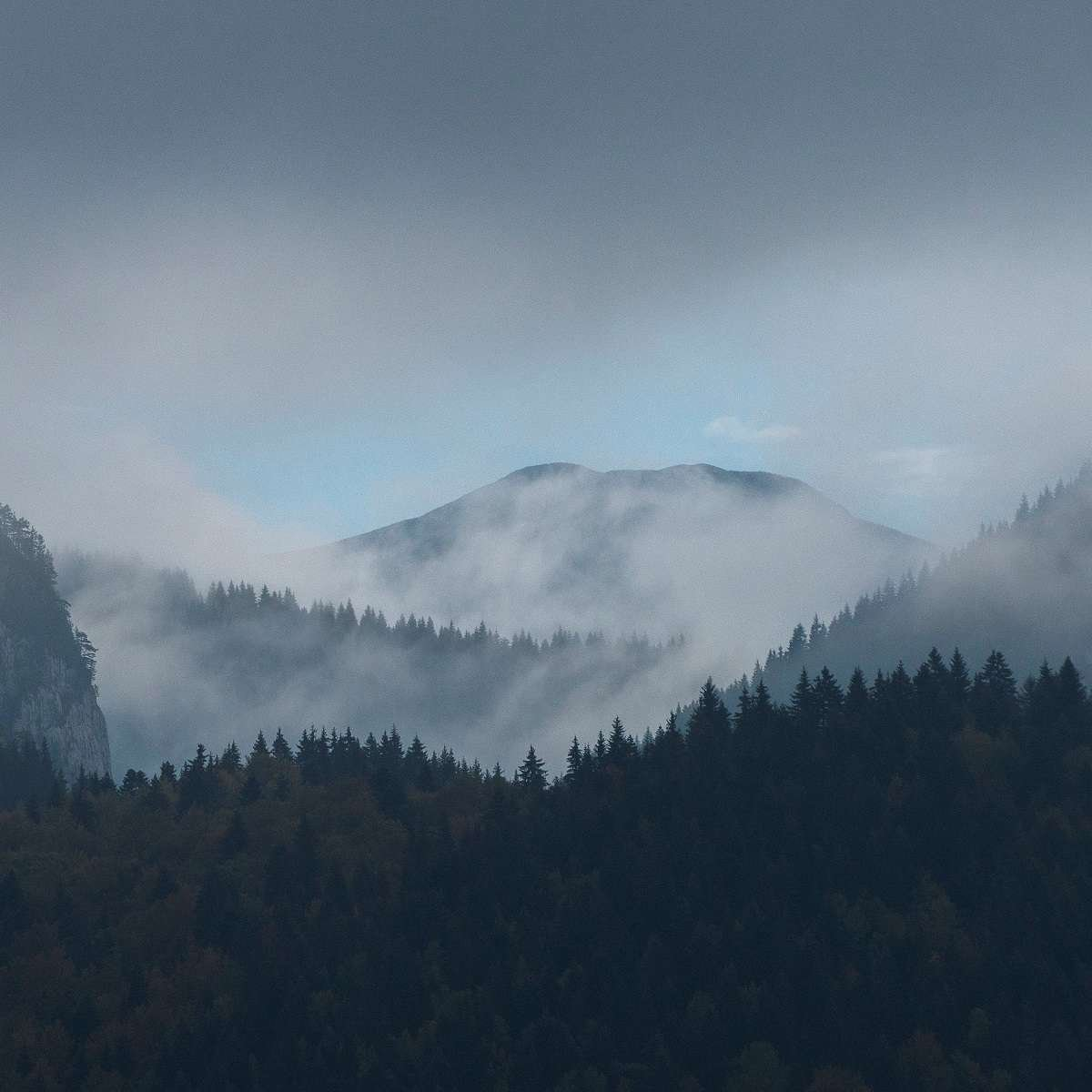mountain forests in the Southern Carpathians